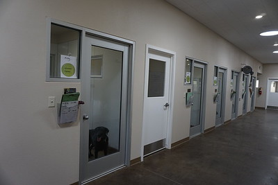 The New Dog Admissions Building