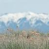 antelope island-9624