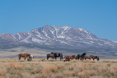Tooele Wild Horses -04764