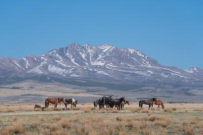 Tooele Wild Horses -04748