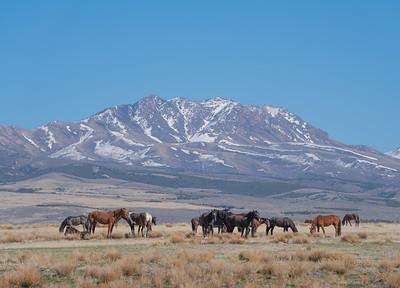 Tooele Wild Horses -04751