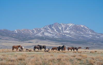 Tooele Wild Horses -04755