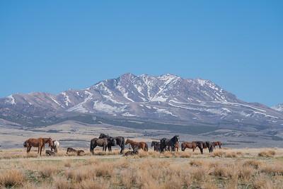 Tooele Wild Horses -04757