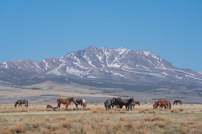 Tooele Wild Horses -04752