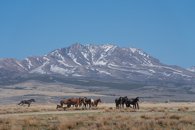 Tooele Wild Horses -04744