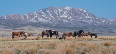 Tooele Wild Horses -04777
