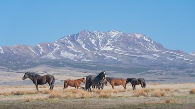 Tooele Wild Horses -04798
