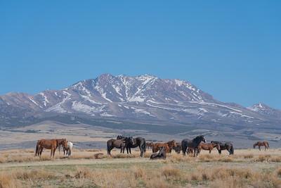 Tooele Wild Horses -04772