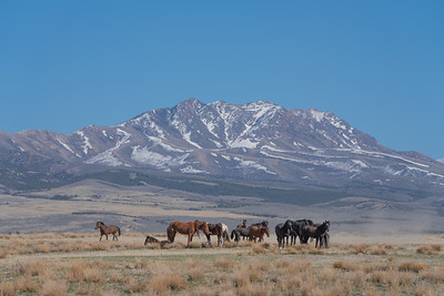 Tooele Wild Horses -04745