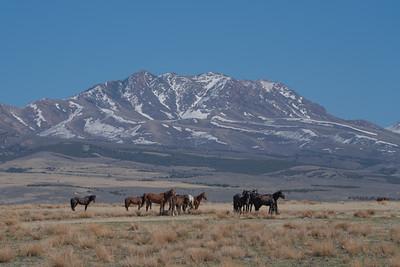 Tooele Wild Horses -04739
