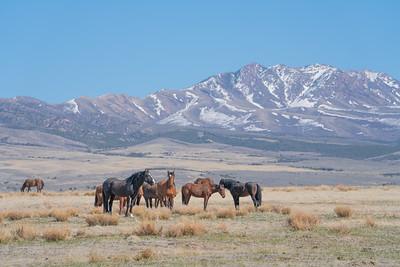 Tooele Wild Horses -04783