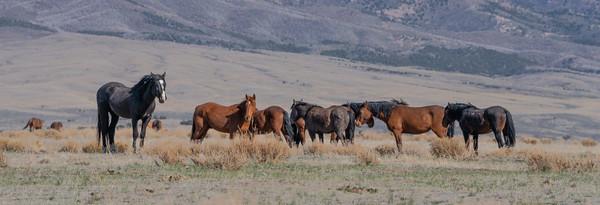 Tooele Wild Horses -04794