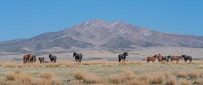 Tooele Wild Horses -04789