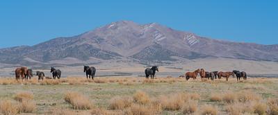 Tooele Wild Horses -04790