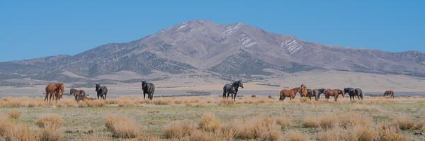 Tooele Wild Horses -04786