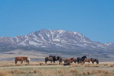 Tooele Wild Horses -04770