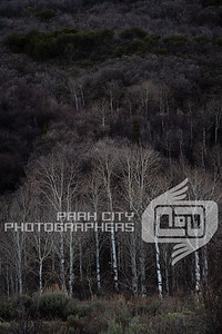 Park City bare trees-07931