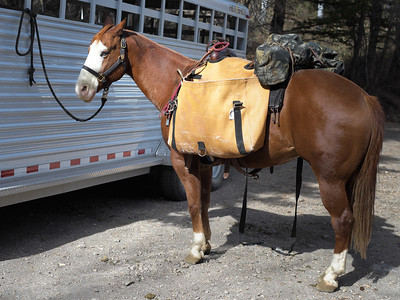 20121019 Pack horse at South Willow Canyon trailhead in Stansbury Mountains, Wasatch National Forest, Utah.  .