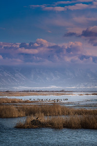 Utah Lake-02841