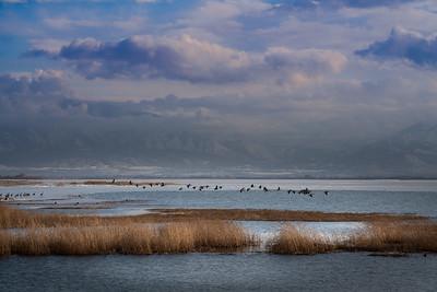 Utah Lake-02844