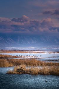 Utah Lake-02839
