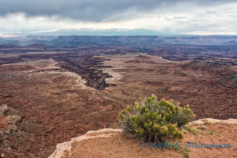 Buck Canyon and LaSal Mountains, Canyonlands NP
