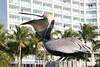 pelican6308