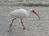 ibis6487