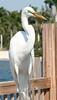 Egret, fishing pier