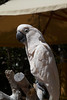 parrot IMG_2903