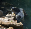 turtle IMG_2899