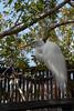 bird sanctuary IMG_2961