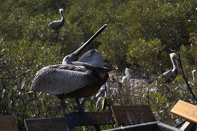 Wild Bird Sanctuary
