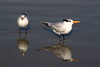 birds IMG_4196