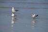 birds IMG_4169