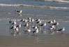 birds IMG_4144