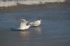 birds IMG_4216
