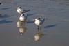 birds IMG_4200