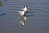 birds IMG_4203