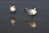 birds IMG_4197