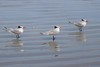 birds IMG_4128