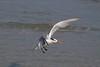 birds IMG_4164