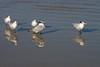 birds IMG_4202