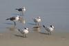 birds IMG_4119