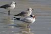 birds IMG_4145