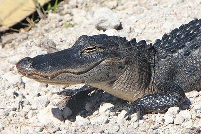 Everglades 2014
