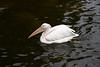 pelican IMG_3592