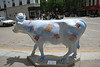 madison cows 001