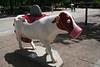 madison cows 013