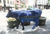 madison cows 002